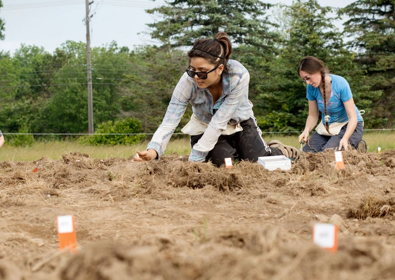 students planting