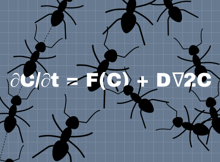 Illustration of ants on top of the Turing equation. Image credit: Chloe Oliva