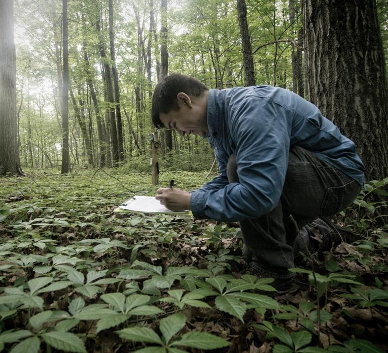 research in forest